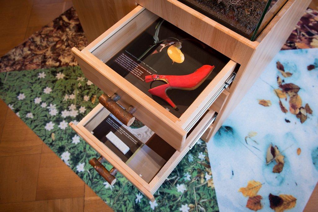 Ausstellung »Buchen musst du suchen ...!« im Schloss Stolberg