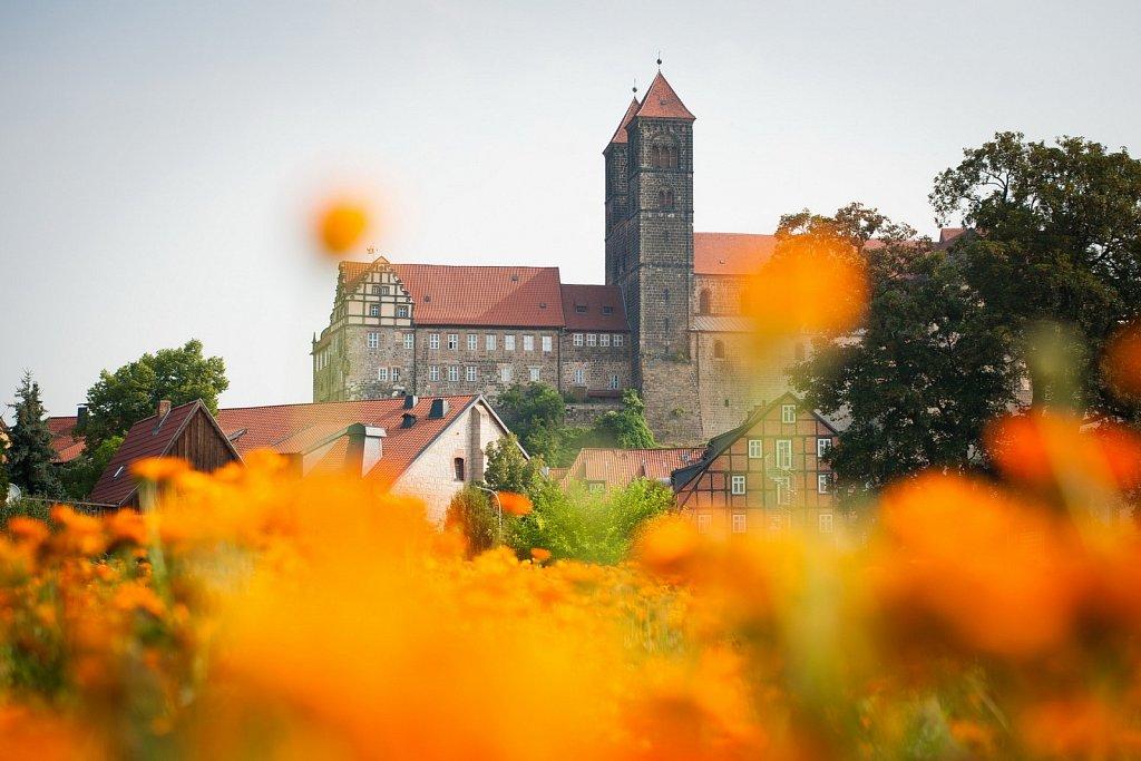 Blick vom Abteigarten zur Stiftskirche in Quedlinburg.