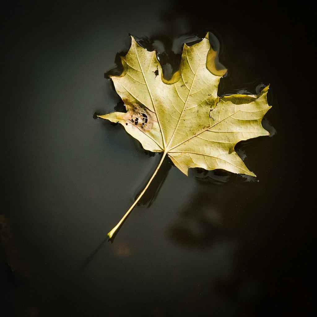 »Herbstspannung«